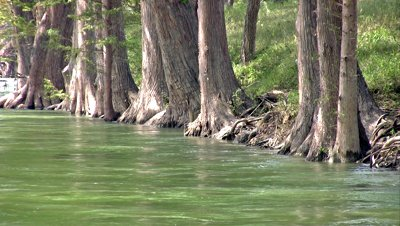 stock-footage-video-of-a-south-texas-river-lined-with-cypress-trees-base-of-trees-and-trunks-flowing-water